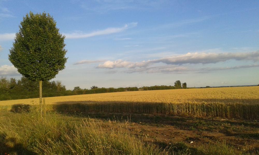 Pinkneys Farm looking across the fields