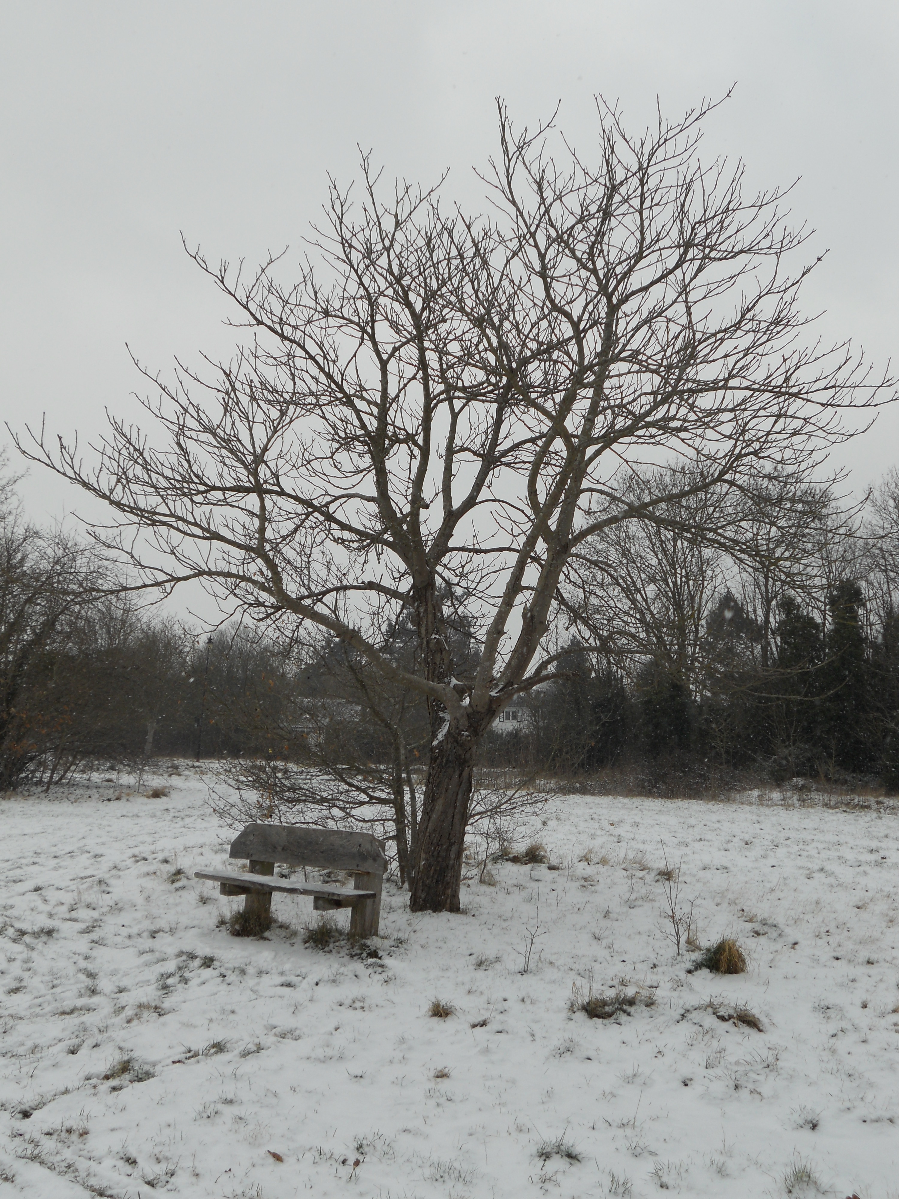 Cold and lonely seat