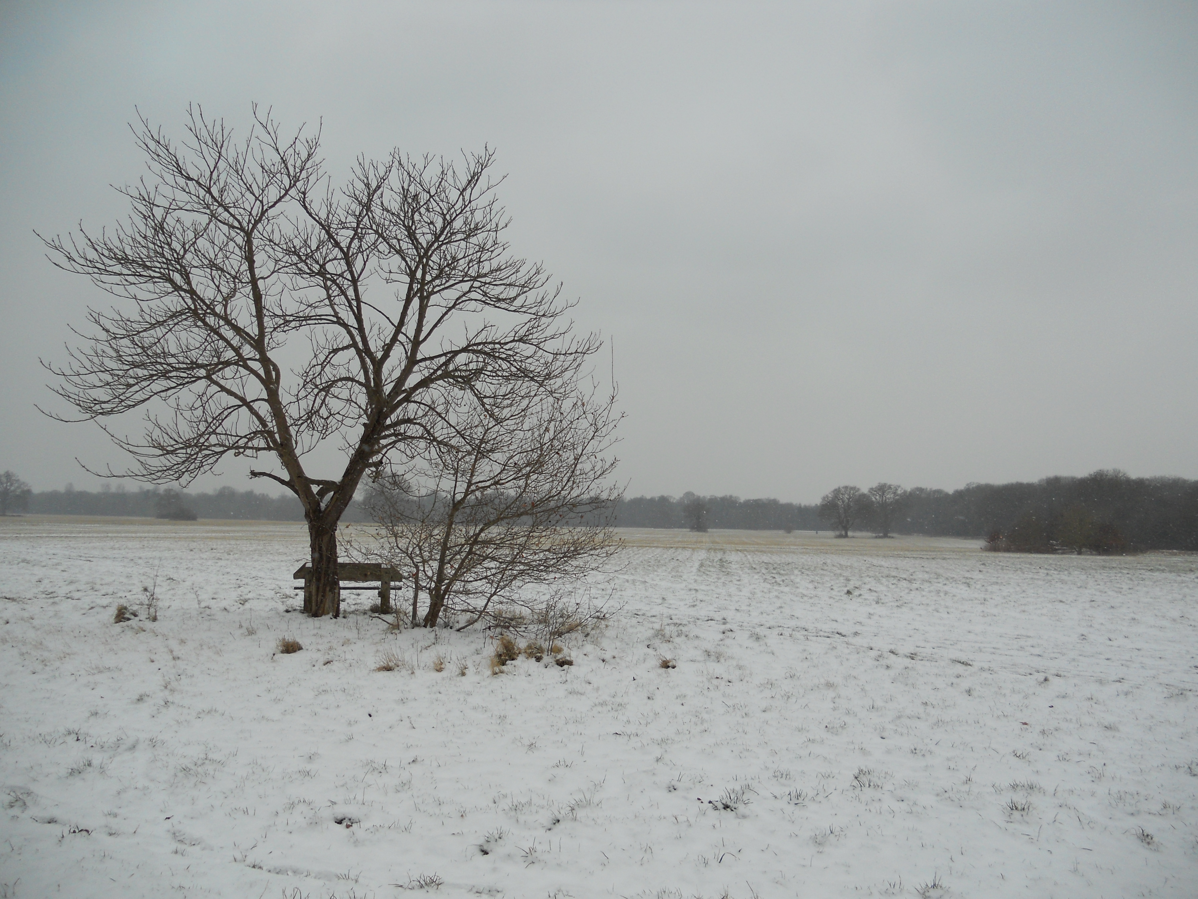 View across Maidenhead Thicket in Winter time