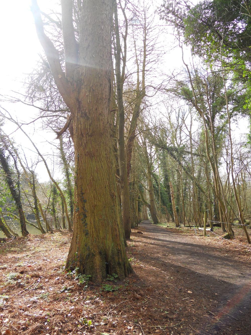 Footpath from Cookham to Maidenhead