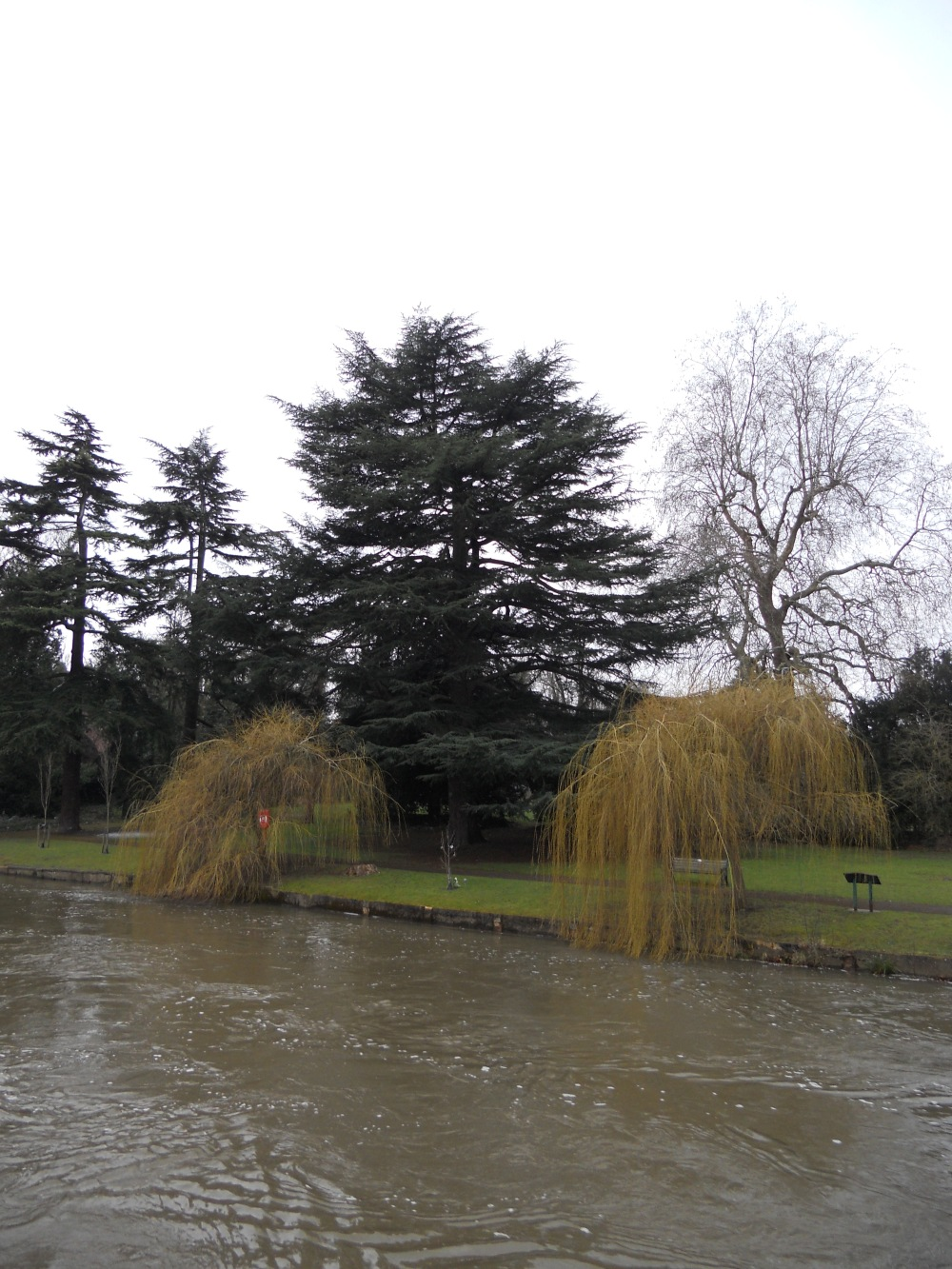 Guards Club Park willow trees by the River Thames