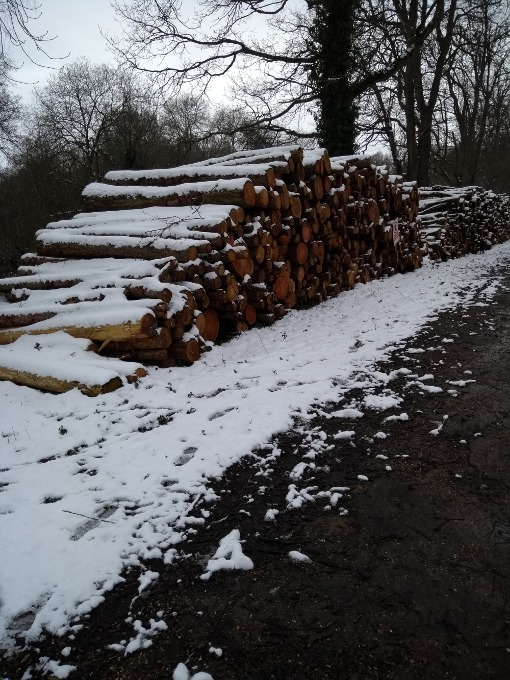 Stacked trees after being chopped down