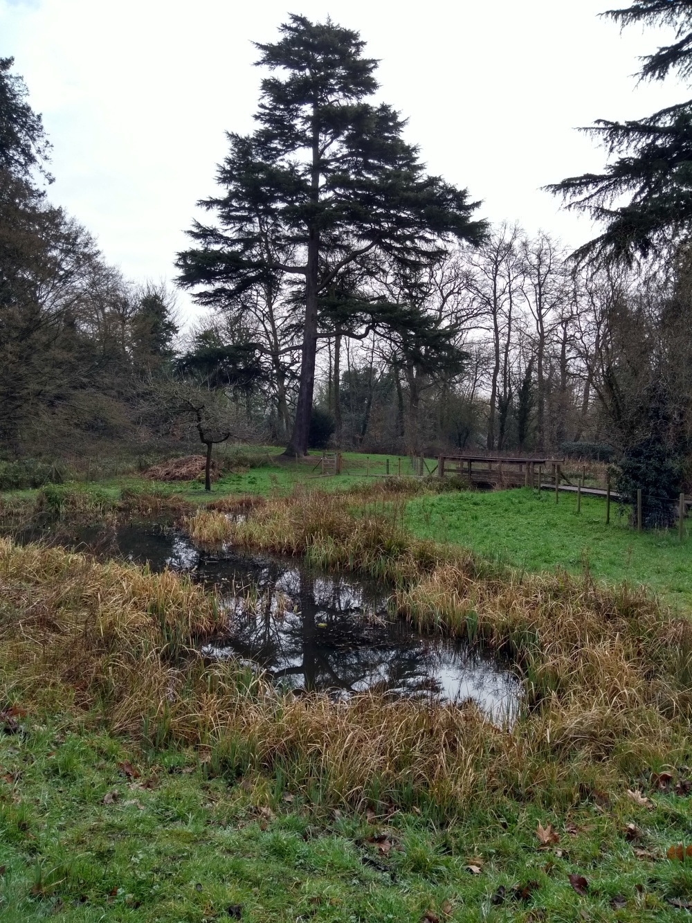 Pond in Braywick Nature Park