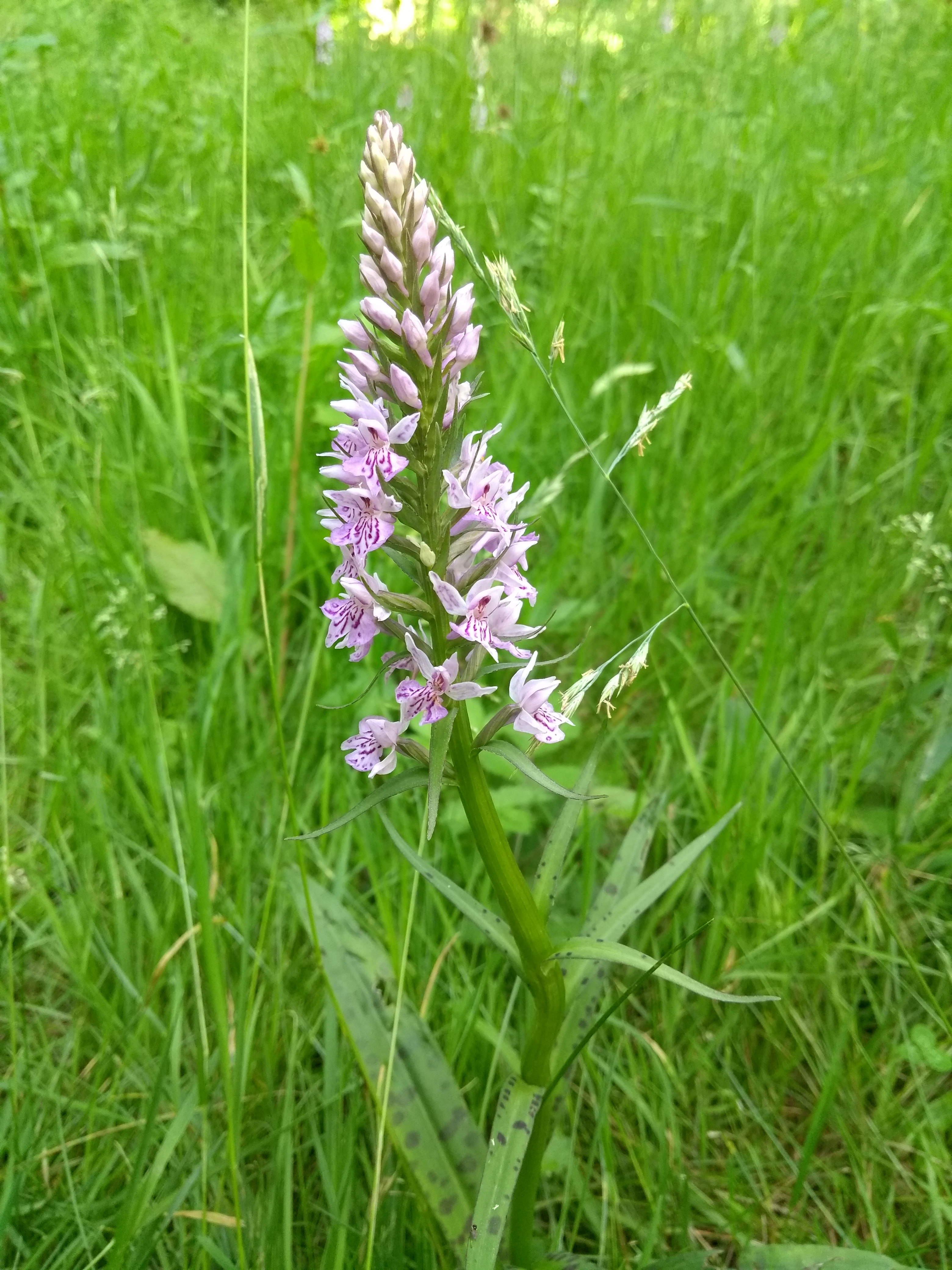 Orchids at the Thicket
