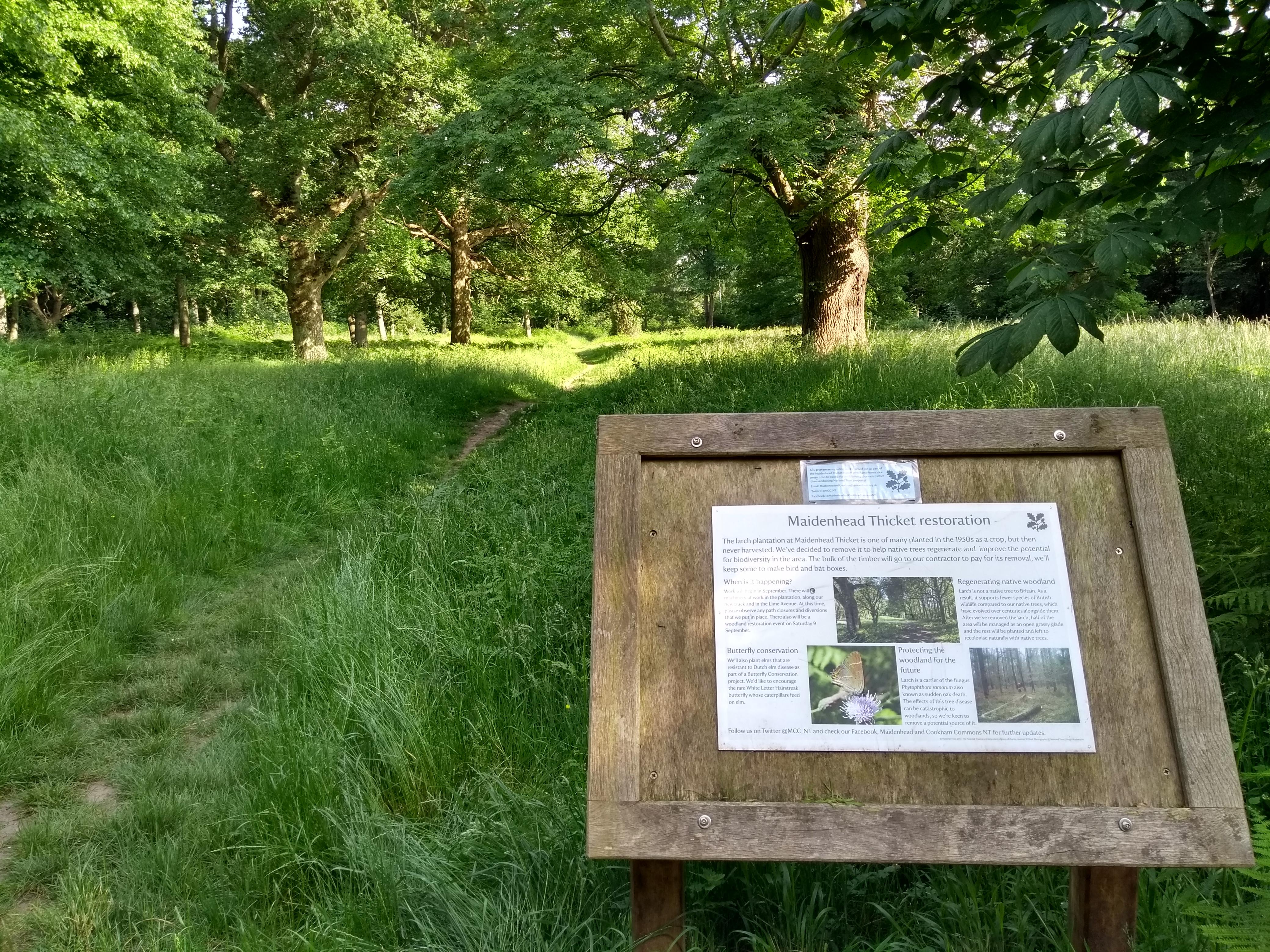 Maidenhead Thicket Restoration
