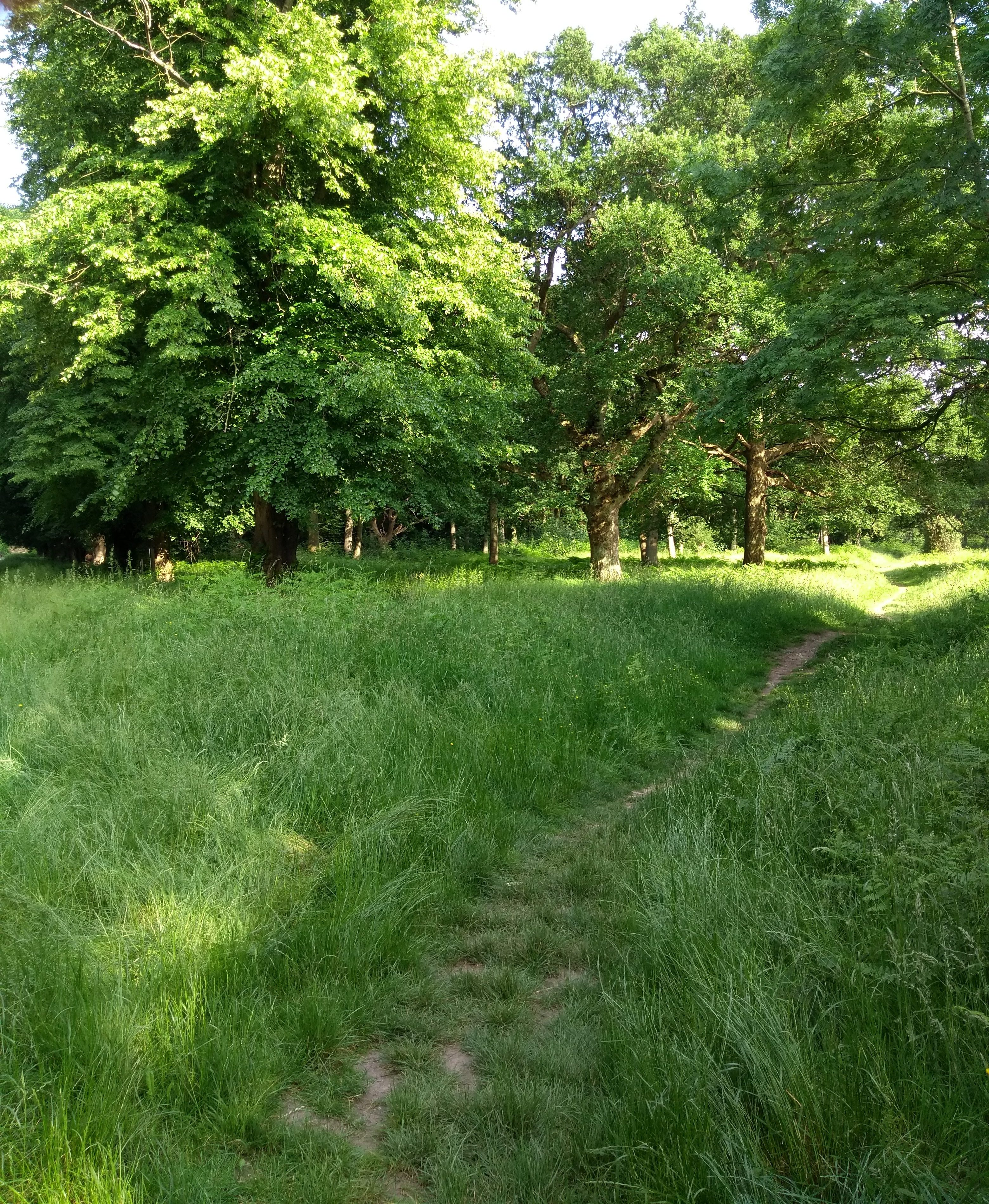 meandering paths near Robin Hoods Arbour