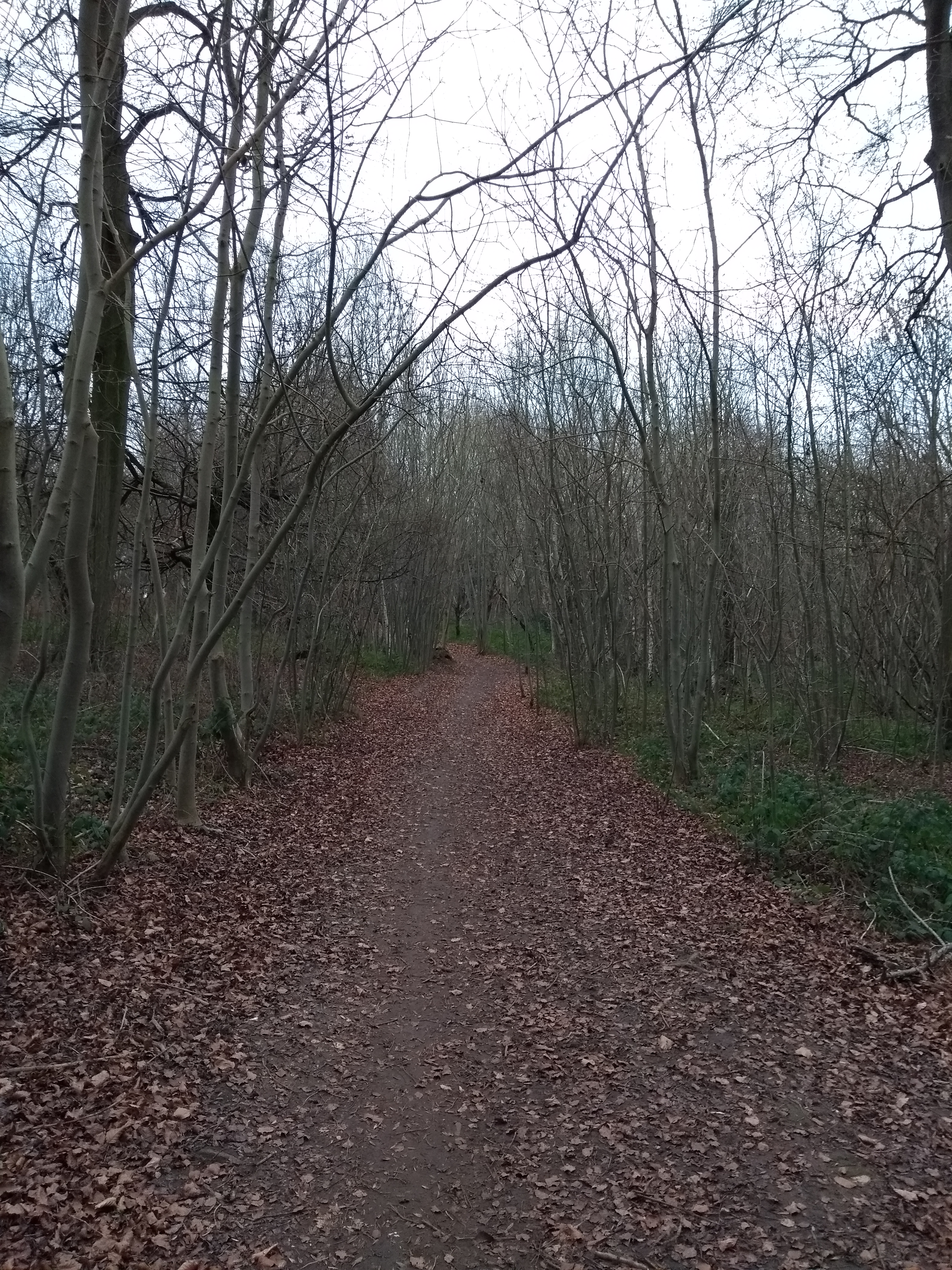 Pathway through the woods close to the Memorial