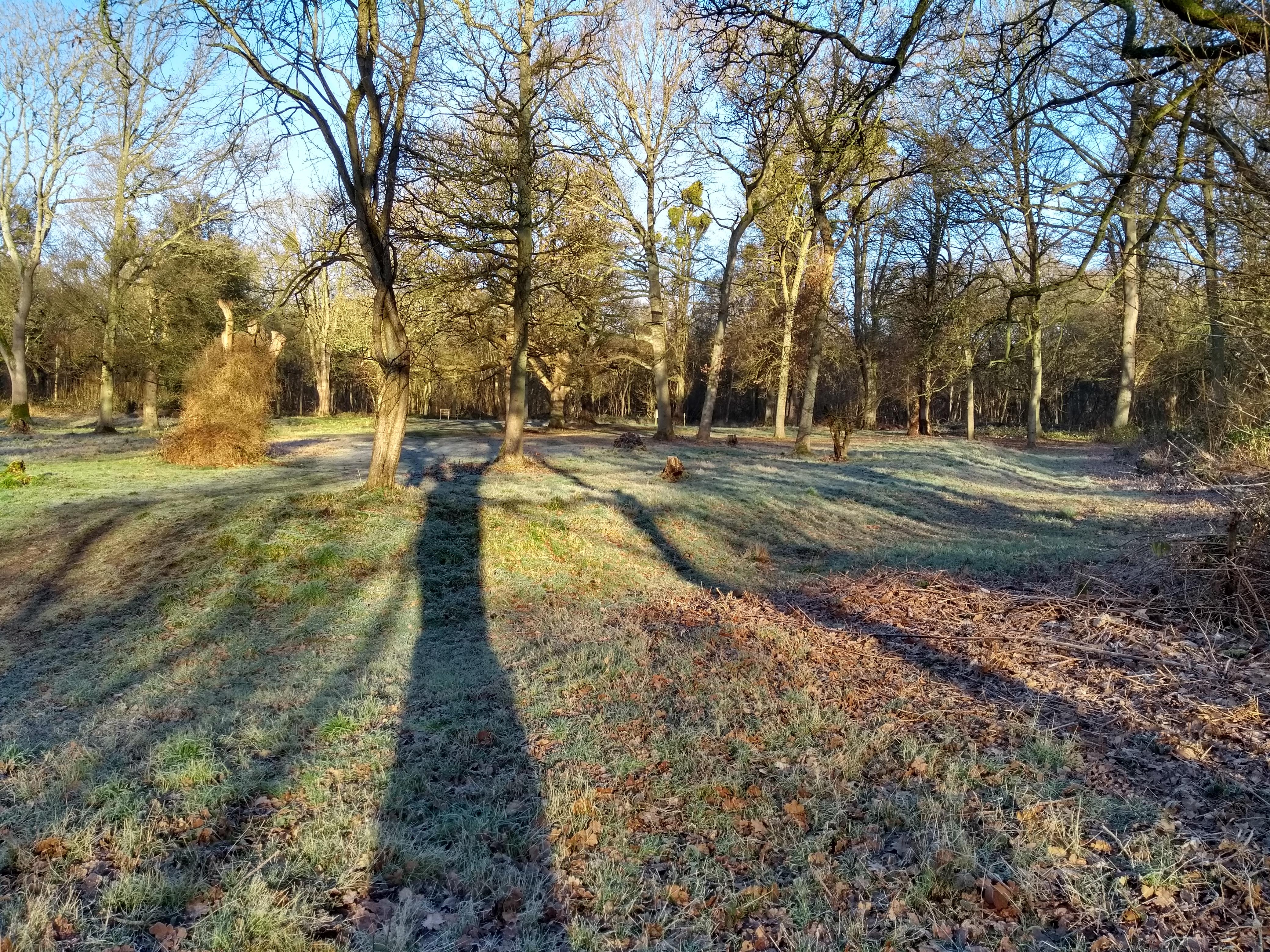 Robin hoods Arbour in Winter